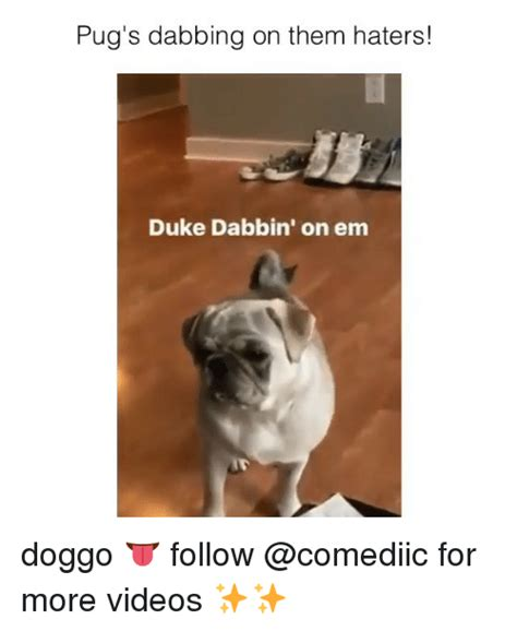 pug haters pug s dabbing on them haters duke dabbin on em doggo follow for more