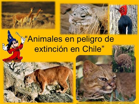 imagenes los animales en peligro de extincion ppt animales en peligro de extinci 243 n en chile