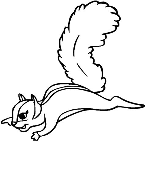 flying squirrel coloring page download print online