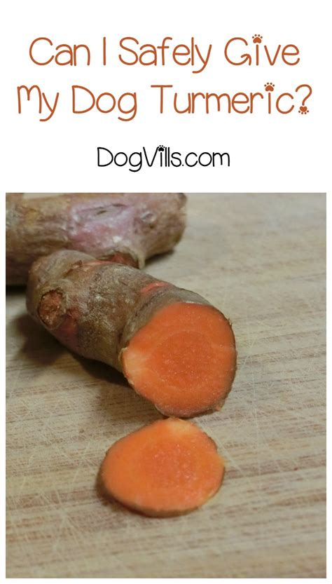can dogs turmeric turmeric for dogs can i give turmeric to my dogvills pets world
