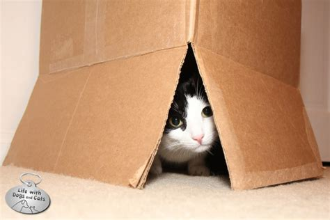 Bookcases Pinterest 18 Reasons Cats Love Boxes Life With Dogs And Cats