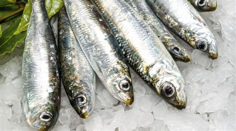 come cucinare le sardine sardine lamiacucinasenzalattosio