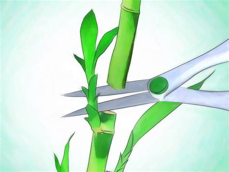how well would a plant grow yellow light 3 ways to grow lucky bamboo wikihow