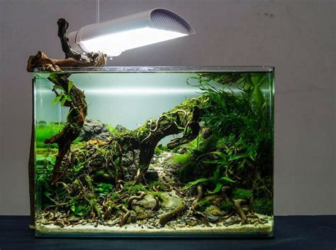 design aquarium nano 17 best images about planted nano tanks on pinterest