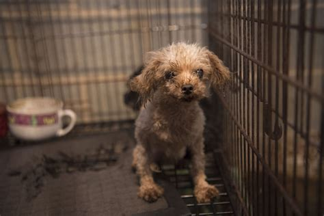 Cabarrus County Warrant Search Puppy Mill Independenttribune
