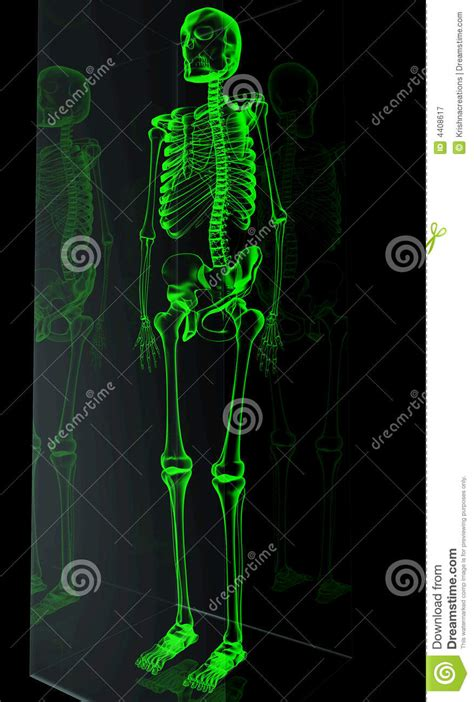 skelton stock illustration illustration  imagination