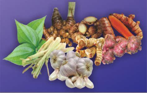 Obat Herbal Penambah Stamina Ayam Aduan tanaman obat untuk kesehatan ayam aduan sabung ayam