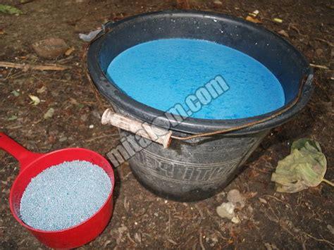 Pupuk Npk Mutiara Untuk Kacang Tanah 12 cara penggunaan pupuk npk mutiara 16 pada tanaman