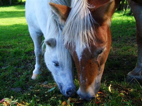 alimentazione cavallo alimentazione cavallo per tipo sesso ed et 224 gruppo grigi