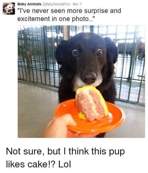 Baby Animal Memes - hilarious baby animal memes www pixshark com images