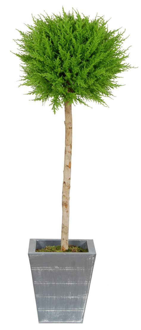 Artificial Topiary Trees 100 Lighted Outdoor Topiary 78 Lighted Topiary Outdoor