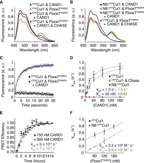 f box protein fbxw7 cand1 promotes assembly of new scf complexes through