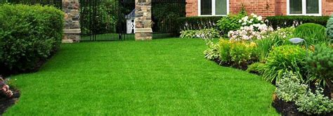 clover lawn and landscape clover lawn care images