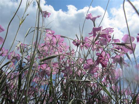 high tea bloemen plukken beeld 1 pluktuin stoutenburg