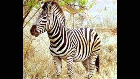imagenes animales herbivoros carnivoros y omnivoros animales carn 237 voros herb 237 voros y omn 237 voros youtube