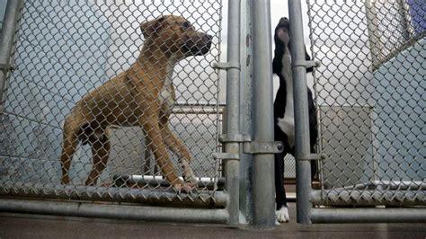 broward shelter broward pet shelter doctored reports on no kill progress audit says sun sentinel