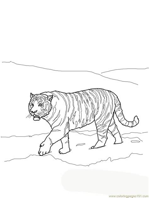 coloring page bengal tiger free tiger roaring coloring pages