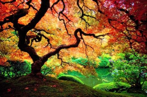 colorful trees colorful tree android central