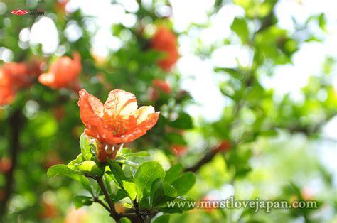 Daftar Sho Natur zakuro at manyo flower park mustlovejapan