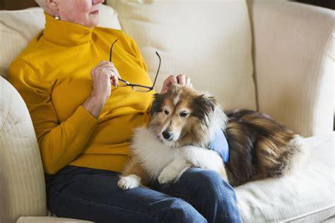 bipolar service psychiatric service dogs for bipolar disorder