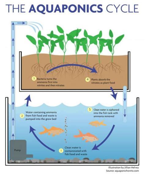 aquaponics diagram how 3d software designs aquaponics system