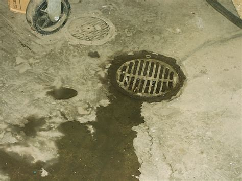 Basement Floor Drain Clogged How To Clear Basement Floor Drain Clogged New Basement And Tile Ideas