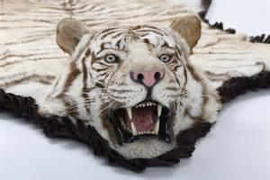 tiger teppich tiger rugs cow hides zebra rugs in dubai carpets dubai