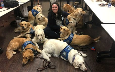 k 9 comfort dogs these amazing dogs are comforting las vegas shooting