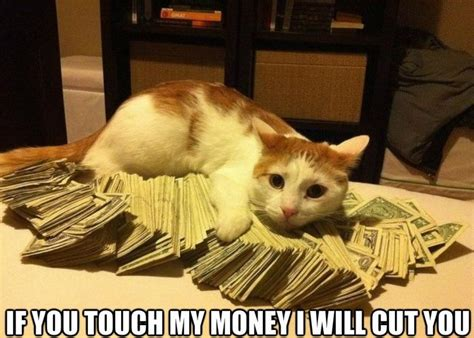 Money Meme - funny gangsta cat meme lol jpg