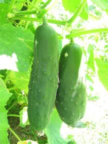 top 10 vegetables to plant in late summer top inspired