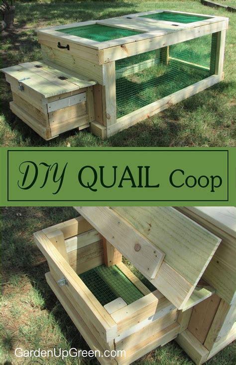 raising quail in your backyard 25 best ideas about quails on pinterest quail raising