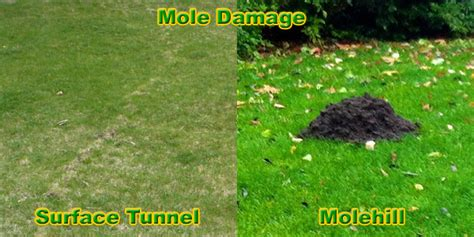 what does not in my backyard mean how to get rid of moles in the yard or lawn