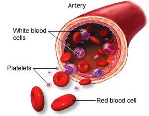 what color are platelets causes of low blood cell white blood cell platelet