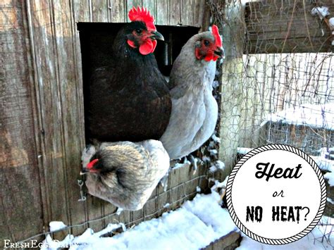 backyard chickens winter to heat or not to heat your coop this winter backyard