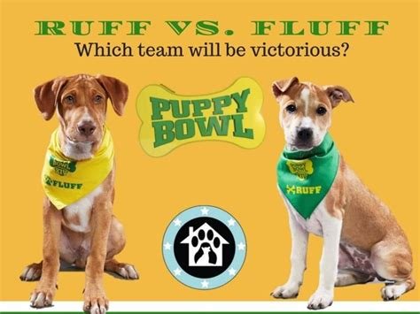 adopt puppy bowl dogs puppy bowl to include alexandria rescue dogs town alexandria va patch