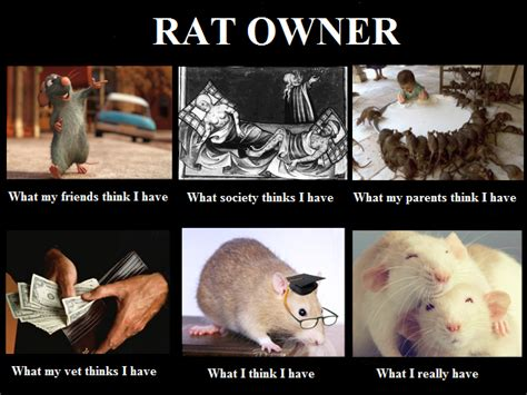 Rodent Meme - image 556282 what people think i do what i really