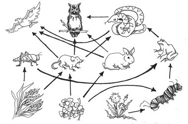 Food Chain Coloring Pages free coloring pages