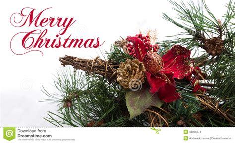christmas background  pine tree branch pine cones