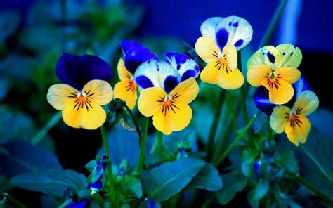 immagini per desktop fiori sfondi hd fiori 70 immagini