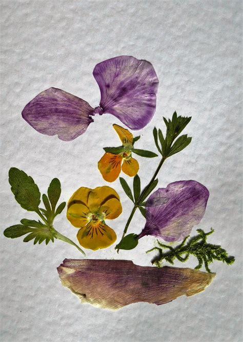 blumen pressen der kreative bastelspa 223 - Blumen Pressen