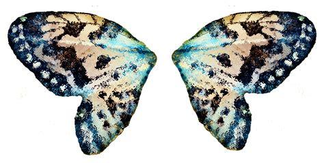 Butterfly Wings butterfly wings hd wallpaper animals wallpapers