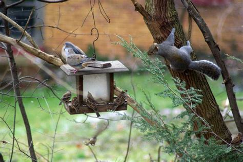 backyard bird feeding your backyard wildlife habitat fall cleanup bird feeding