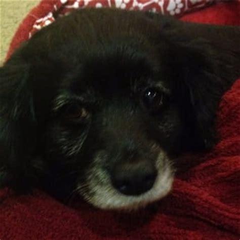 sacramento spca dogs sacramento spca 94 photos 128 reviews animal rescue shelters 6201 florin