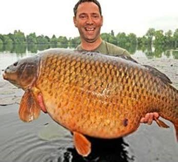Benih Ikan Nila Unggulan cara budidaya ikan nila foto 2017