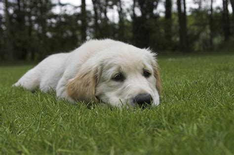 runny in dogs runny nose causes of runny nose and nasal discharge in dogs