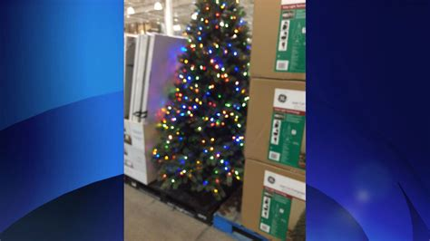 2015 costco christmas tree how early is early decorations seen at costco