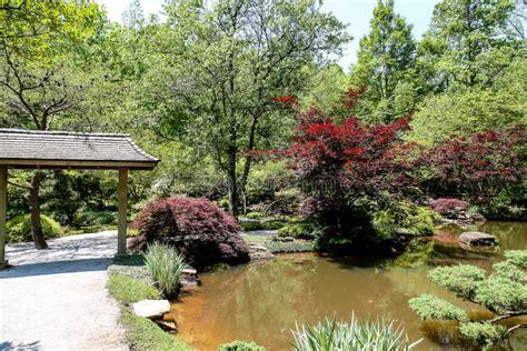aceri da giardino aceri giapponesi e giardino fotografia stock immagine di