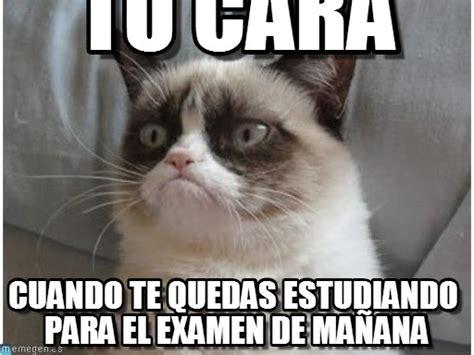 Gato Meme - tu cara gato enojado meme on memegen