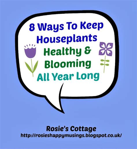 8 G Ways To Be by Rosie S Cottage 8 Ways To Keep Houseplants Healthy