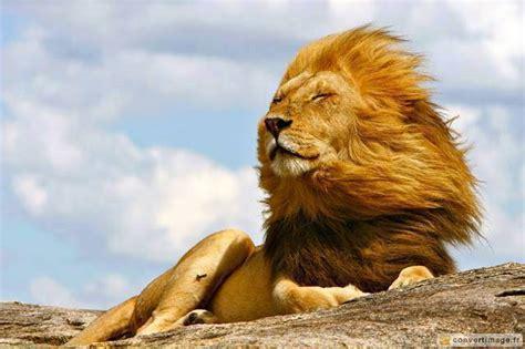 1291509445 la maman de leon est le 243 n inop 237 a